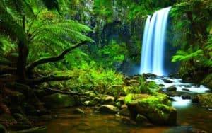 Национальный парк в Гваделупе